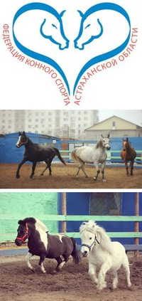 Уроки верховой езды, конные прогулки